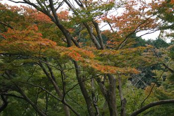 京都・三室戸寺の紅葉