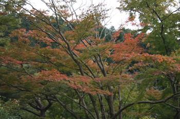 京都宇治・三室戸寺の紅葉状況(2010/10/29)