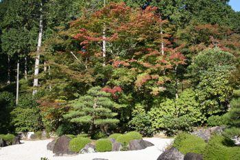 京都宇治三室戸寺の紅葉