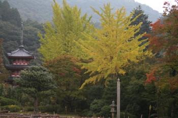 京都宇治・三室戸寺の紅葉状況(2010/11/7)