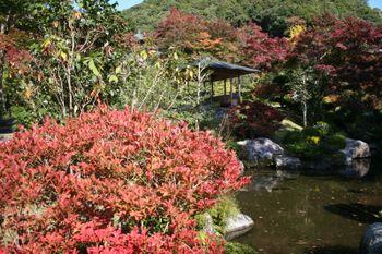 京都宇治三室戸寺のドウダンツツジ