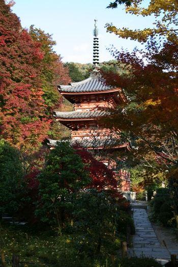 京都宇治・三室戸寺の紅葉状況(2010/11/17)