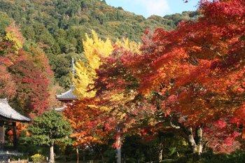 京都宇治・三室戸寺の紅葉状況(2010/11/18)