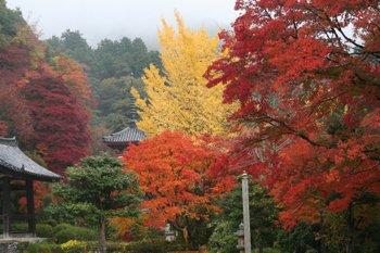 京都宇治・三室戸寺の紅葉状況(2010/11/22)