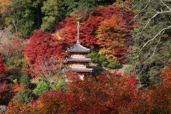京都宇治・三室戸寺の紅葉状況(2010/11/24)
